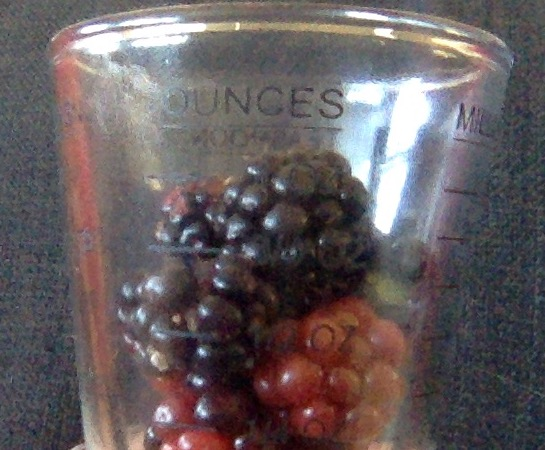 1 oz of blackberries 3g of carbs.jpg