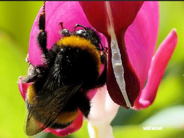Bee2 - Copy.JPG