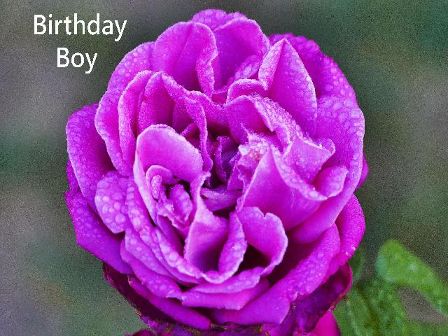 Birthday Boy.JPG