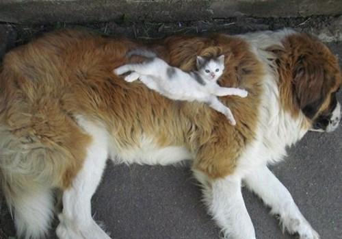 catdog6.jpg