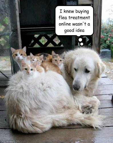 cats &dog.jpg