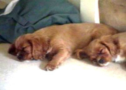 dog tired.jpg