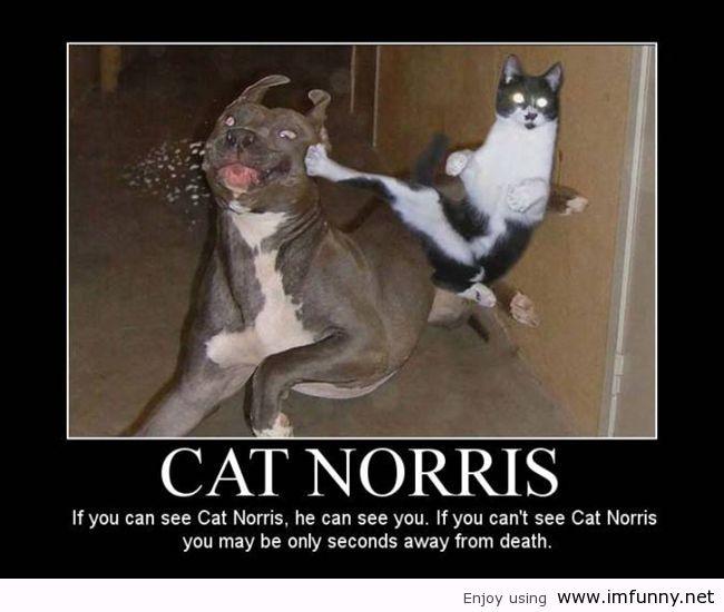 funny-cat-pictures-quotes-cat-norris-48104.jpg