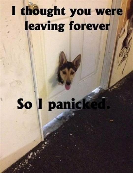 funny-dog-meme-ruined-door.jpg