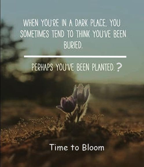 planted or buried pic.jpg