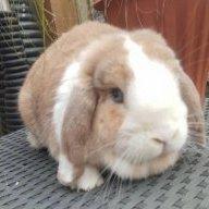 Rabbitchops_