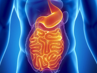 The digestive system is like a long tube; from the mouth down to the rectum