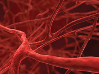 The vascular system carries oxygenated blood around the body