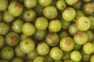 gooseberry carbohydrate